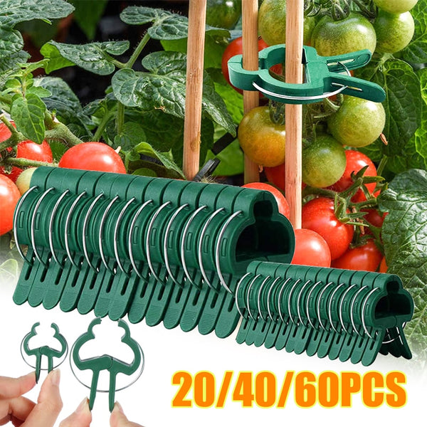 20/40/60Pcs Fastener Greenhouse Bracket Pole Fixed Clamp Plants Flower Seedling Stem Support Grafting Stakes Connector Clip