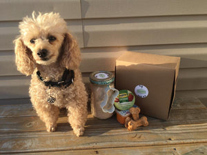 Dog treat kit with all supplies included, bake dog treats right at home! Give your dog fresh treats to show your love for your furry friend!