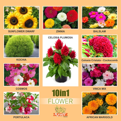 Summer Flower Garden Seeds Series 10 Varieties in 1 Special Pack