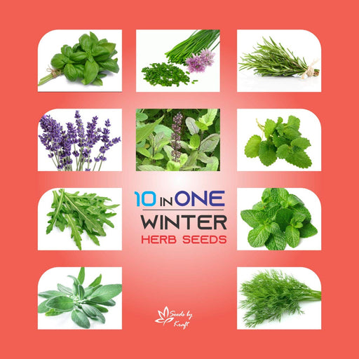 Winter Herb Seeds For Your Kitchen & Garden Easy To Sow And Grow (10 Varieties)