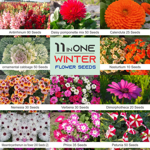 Winter Flower Seeds Beautiful Flowers Non GMO Heirloom July onward Sowing (11 varieties)