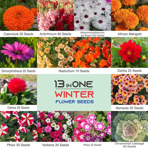 Winter Flower Non GMO Heirloom Seeds July to December Sowing (13 varieties)