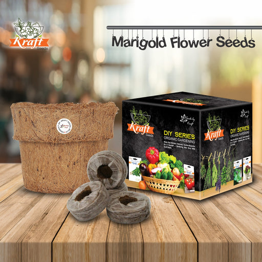 DIY Series Box Of AFRICAN MARIGOLD Dubble Orange Flower Seeds With Organic Pot & Germination Medium Coin