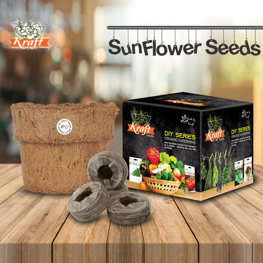 DIY Series Box Of SUNFLOWER DWARF SUNGOLD Flower Seeds + Organic Pot & Germination Medium Coin