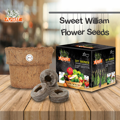 DIY Series Box Of SWEET WILLIAM MIX Seeds With Organic Planter & Germination Medium Coin