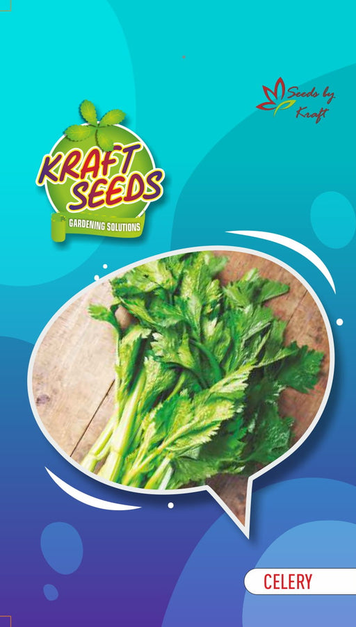 Celery English Vegetable Improved Seeds Small Pack