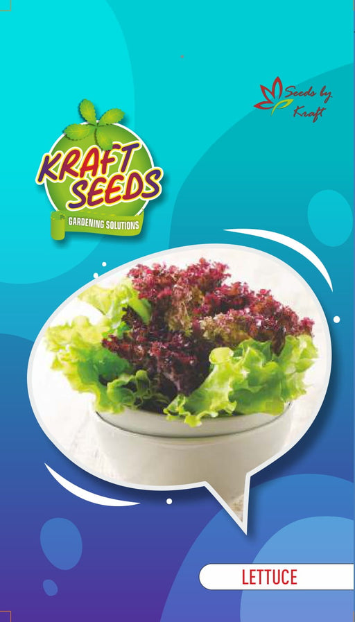Lettuce Iceberg Improved Quality English Vegetable Seeds Small Pack
