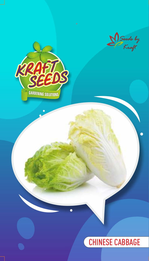 CHINESE CABBAGE English Vegetable Improved Seeds Small Pack