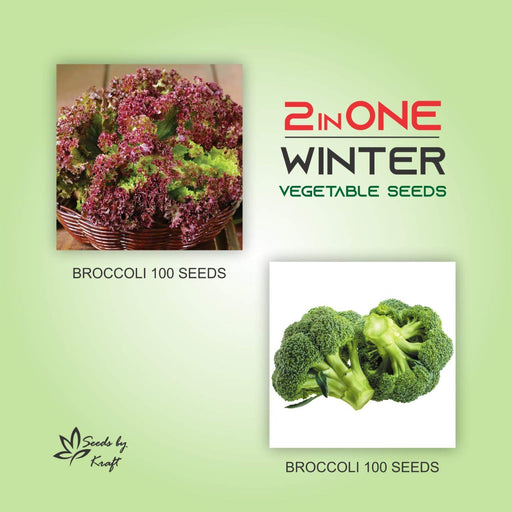 Broccoli And Lettuce Non GMO Heirloom Seeds (2 varieties)