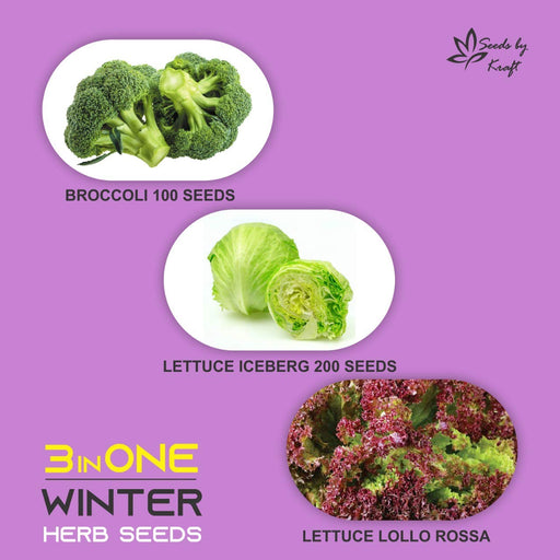 Lettuces And Broccoli Non GMO Heirloom Seeds (3 Varieties)