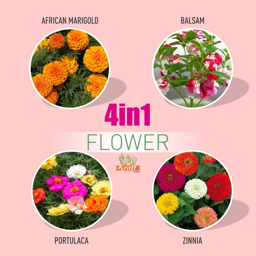 Beautiful Flower Seeds Pack(4 varieties)