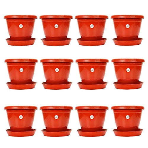 8 inch, Red Planter Pot with Bottom Plate/Tray- Pack of 12 Pots