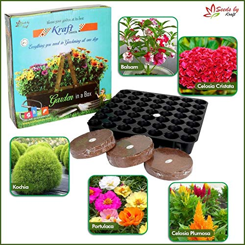 Garden In A Box Series Summer Sowing – Seeds Pro Tray, Flower Seeds, Agropeat / Cocopeat Packed in One Beautiful Gift Box For Birthday Parties, Corporate Events by Kraft Seeds