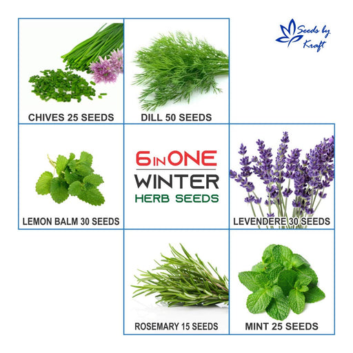 Winter Herb Seeds For Your Kitchen & Garden Easy To Sow And Grow (6 Varieties)