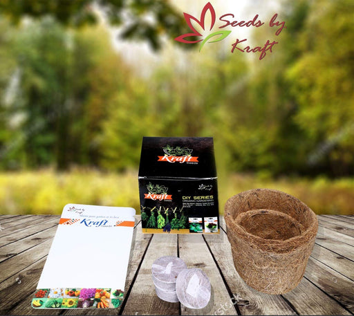 DIY Series Box Of Squash English Vegetable Improved Seeds Organic Pot & Germination Medium Coin