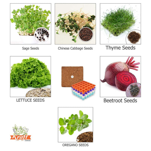 Herb Seeds and Exotic Vegetable Seeds, Cocopeat Germination Medium, Colour Seed Tray-Balcony Garden