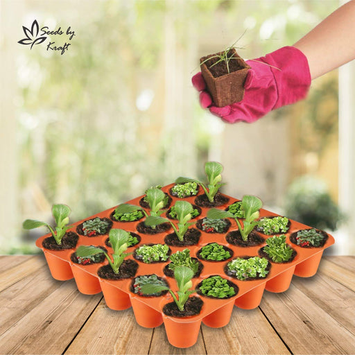 Seedling Starter Tray Set Colourful Spectacular Quality (25 Holes in One Tray) (Pack of 5)
