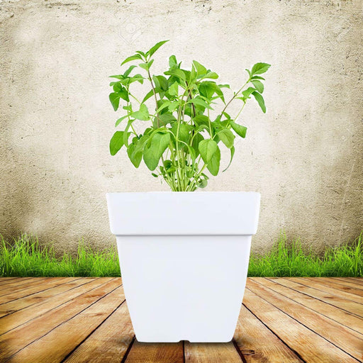10-inch Square Modern White Plastic Flower Pots with Subtle Drainage Holes (6 Pots)