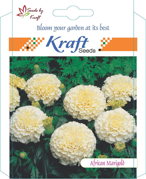 African Marigold F1 VANILLA WHITE Flower Seeds Pack for Home and Balcony Gardening