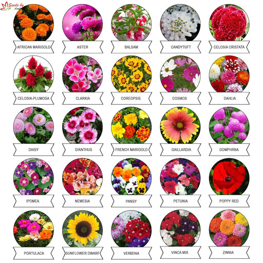 Varieties of Summer Flower Seeds ( Pack of 25)