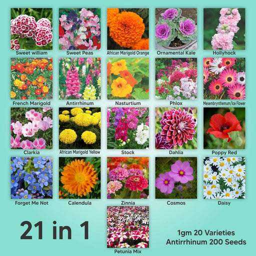 Gate Garden | Mix of 21 Different Varieties of Non-GMO Seeds | Bee and Butterfly Garden Seeds | Colorful Annual Flower Seeds | Indian Seeds for Your Garden | 1 Gram Each Variety