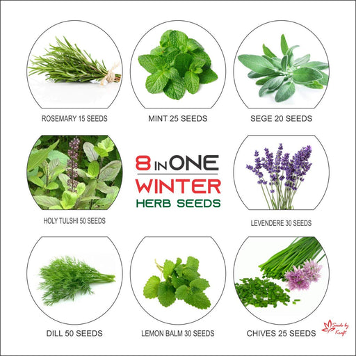 Herb Seeds For Your Kitchen Recipes Grow Fresh Herbs Non GMO (8 Varieties)