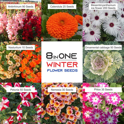 Flower Seeds Amazingly Beautiful Flowers(8 varieties)