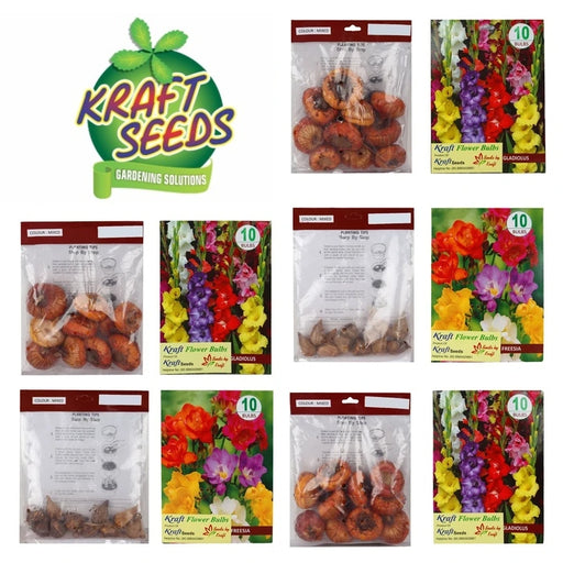 Flower Bulbs Box (Gladiolus and Freesia Bulbs) (Multi color) - Total 50 Bulbs