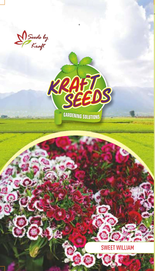 SWEET WILLIAM MIX Flower Seeds Pack With Agropeat 100gm