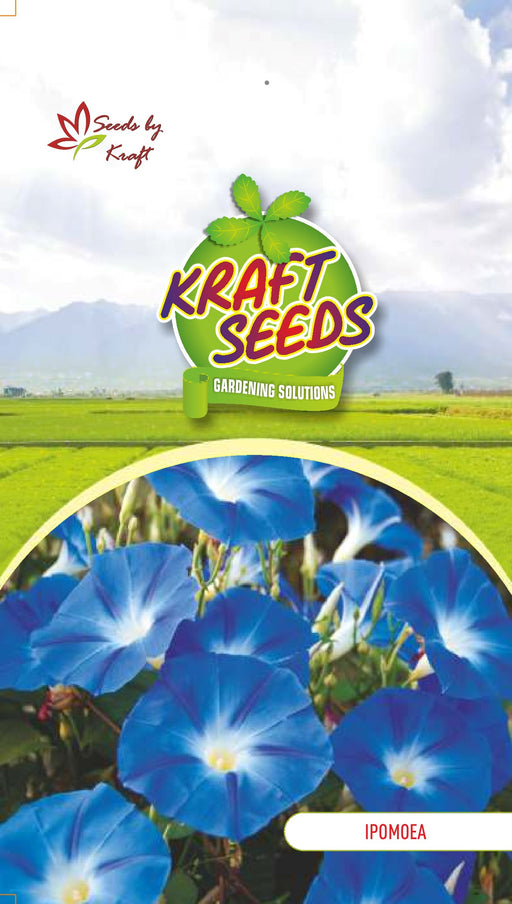 IPOMEA / MORNING GLORY K-S SPL MIX Flower Seeds Pack for Home and Balcony Gardening