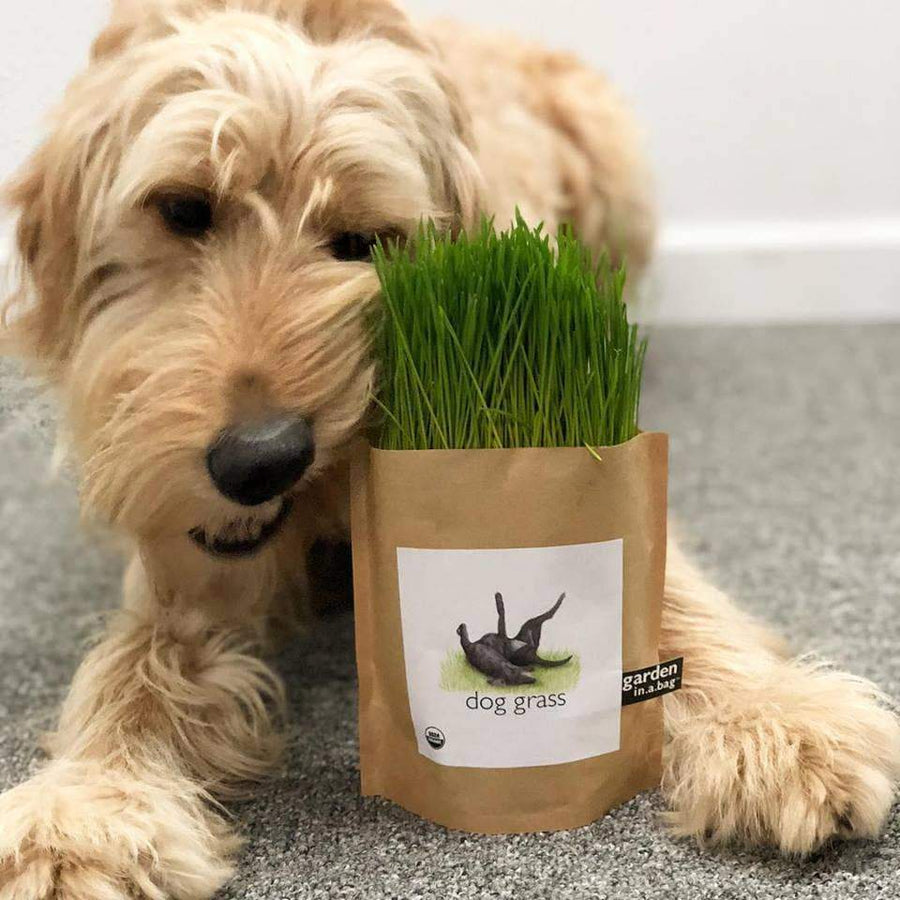 Organic Dog Grass Treat