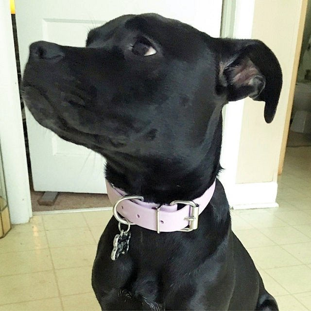 Pastel Purple Biothane Dog Collar - 1 inch (25mm) wide - limited