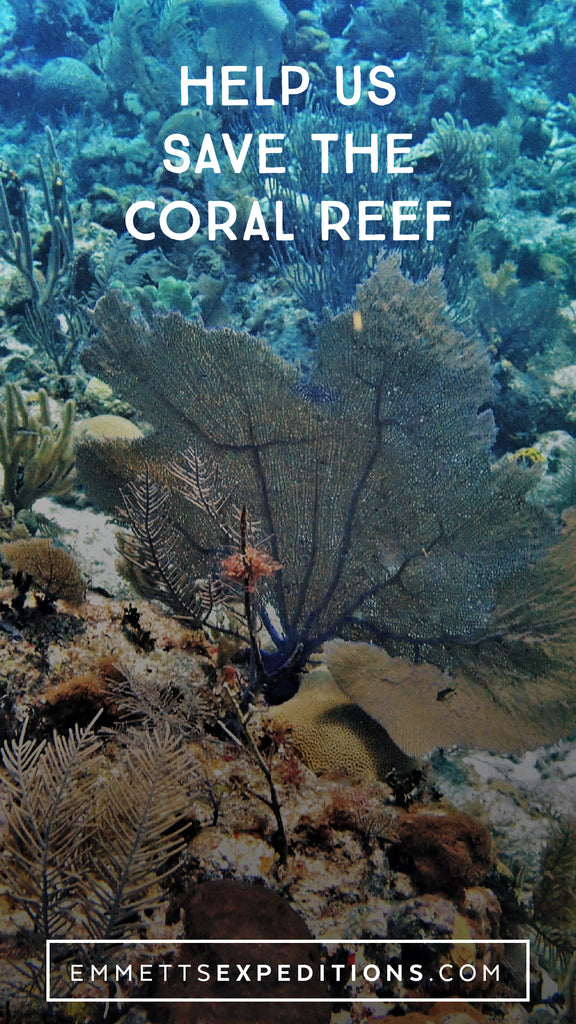 Help Us Save the Coral Reef | Emmett's Expeditions