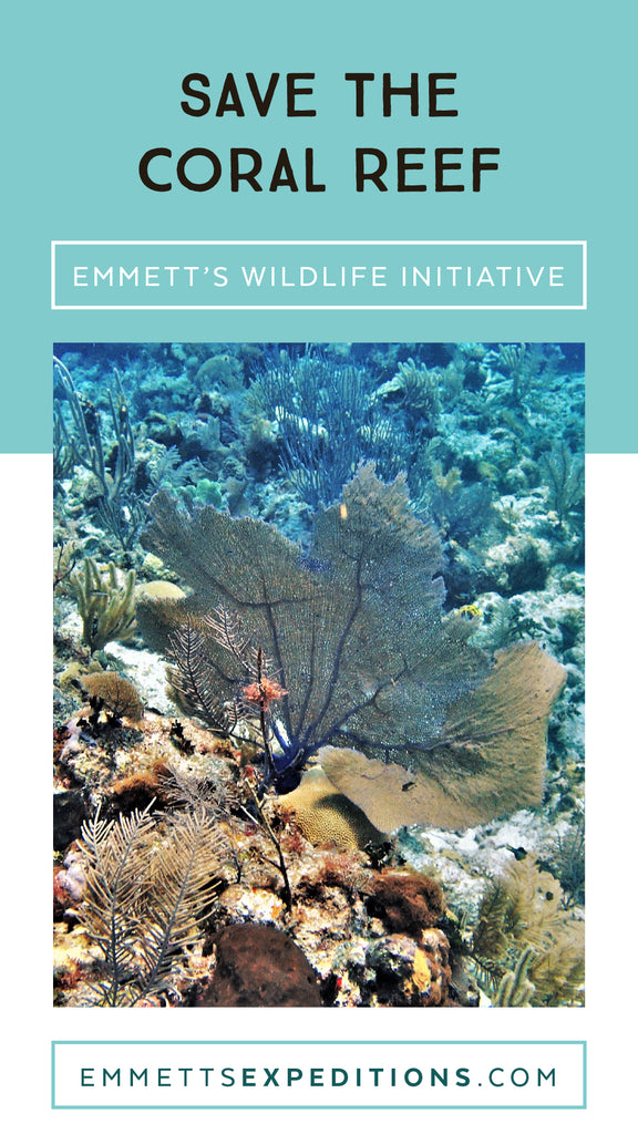 Save the Coral Reef | Emmett's Wildlife Initiative