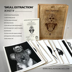 'Skull Extraction' Boxset III