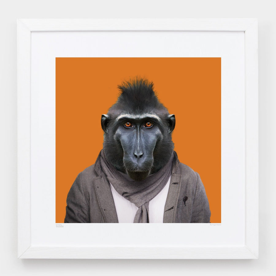 Yago Partal Gus, the Celebes Crested Macaque - Evermade