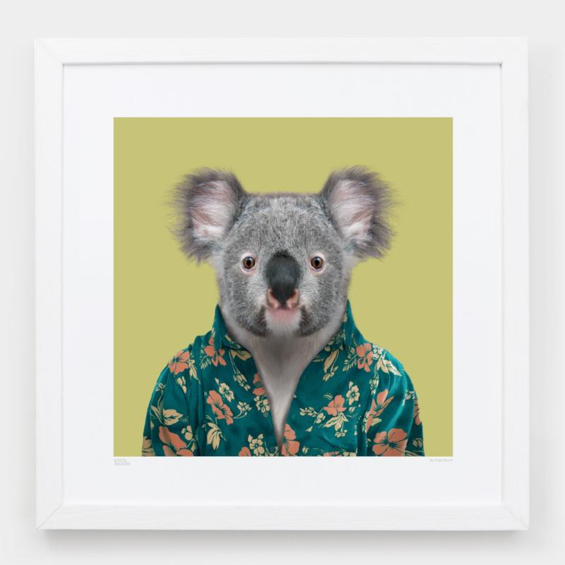 Yago Partal Cooper, the Koala - Evermade