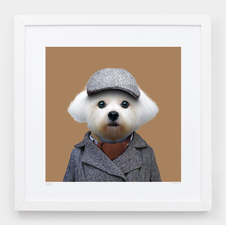 Yago Partal Zazu, the Maltese Dog - Evermade