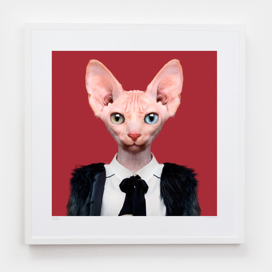 Yago Partal Cora, the Sphynx Cat - Evermade