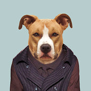 American Staffordshire Dog - Evermade