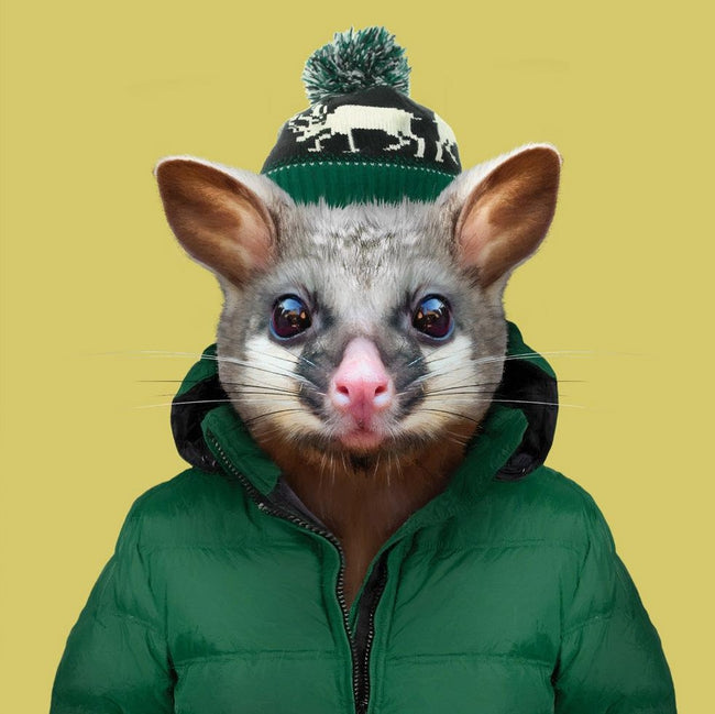 Yago Partal Arlo, the Common Brushtail Possum - Evermade
