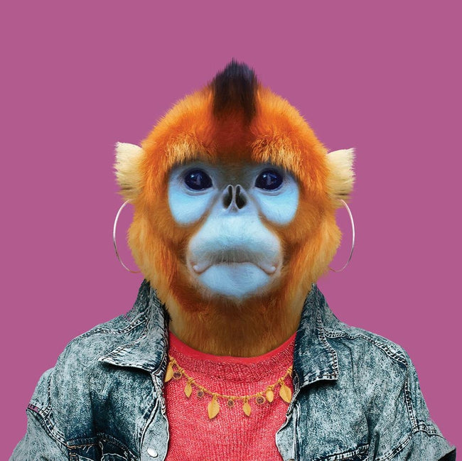 Hui, the Golden Snub-nosed Monkey - Evermade