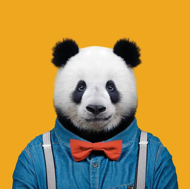 Yago Partal Bao, the Giant Panda - Evermade