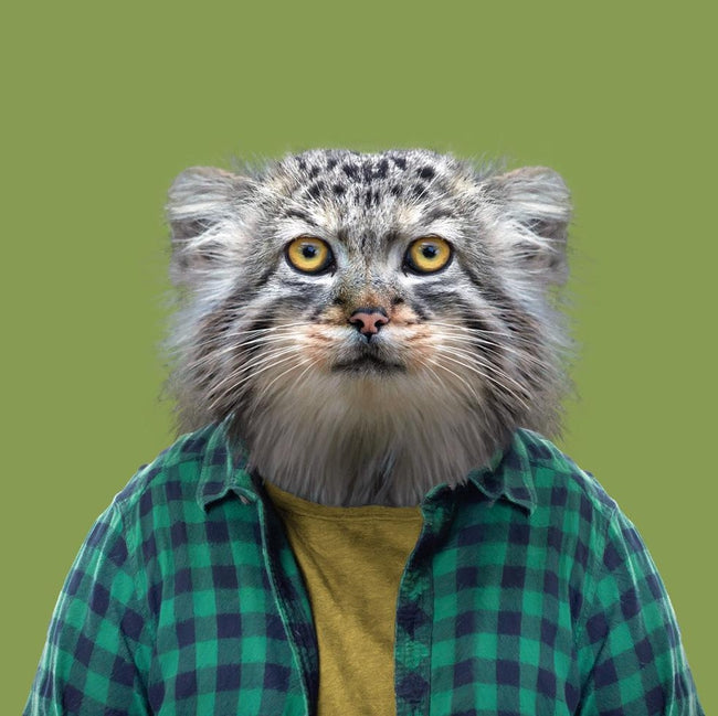 Yago Partal Khulan, the Pallas's Cat - Evermade