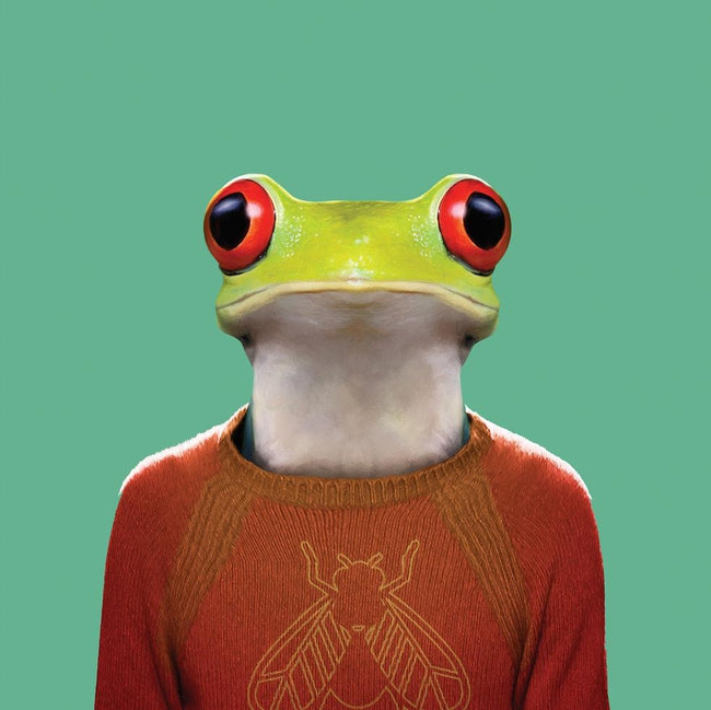 Yago Partal Camilo, the Red-eyed Tree Frog - Evermade