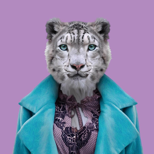 Yago Partal Aiperi, the Snow Leopard - Evermade