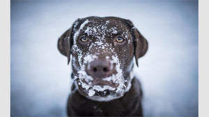 5 tips to washing your pooch in winter | Bark Butter
