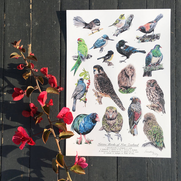 Native New Zealand Birds Print