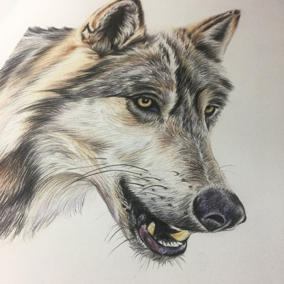 ORIGINAL Wolf Drawing