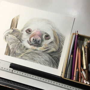 ORIGINAL Sloth Drawing